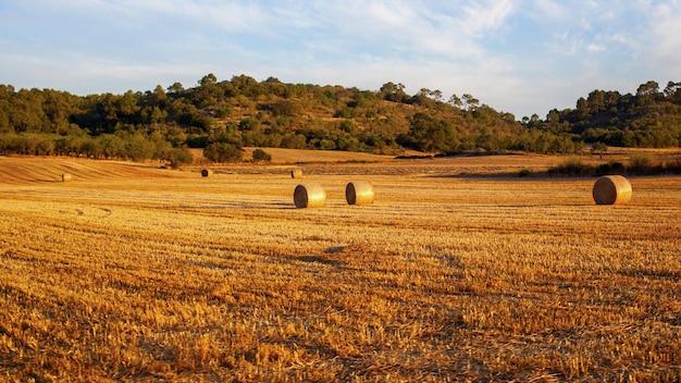 Balles de foin sur champ après la récolte