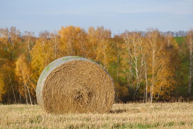 Balles de paille dans le champ d'automne