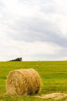 Balles de paille sur une prairie ensoleillée