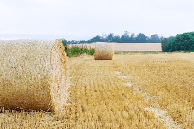 Balles rondes de paille sur les terres agricoles contre un ciel bleu nuageux. champ tondu après la récolte du blé.