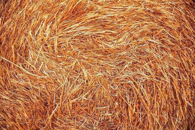 Des ballots de paille dans le champ de blé. été