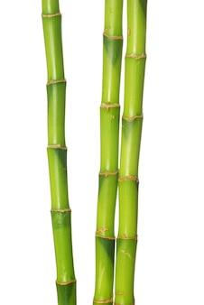 Bambou vert isolé sur fond blanc