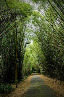 Des bambous surplombent la route.