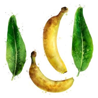 Banane. illustration aquarelle