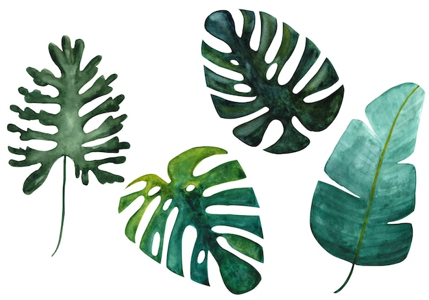 Banane monstera verte tropicale isolée et feuilles fendues sur fond blanc ensemble d'illustrations à l'aquarelle dessinées à la main la conception avec des plantes exotiques est parfaite pour la carte de conception de sites web d'impression textile