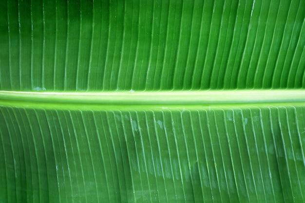Banane verte laisse fond de texture nature