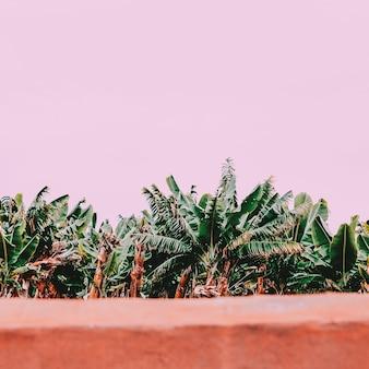 Bananeraie. plantes sur concept rose. ambiance tropicale minimale