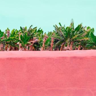 Bananeraie. plantes sur concept rose. ambiance tropicale de la mode