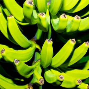 Bananes vertes sur l'arbre. art minimal