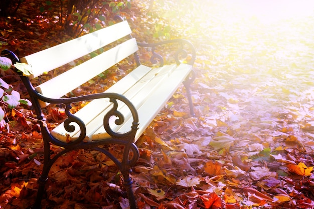 Banc blanc vide dans le parc ensoleillé d'automne avec, aux tons rétro