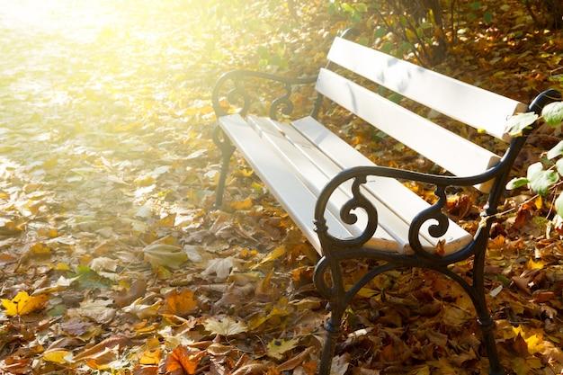 Banc blanc vide dans le parc ensoleillé d'automne avec