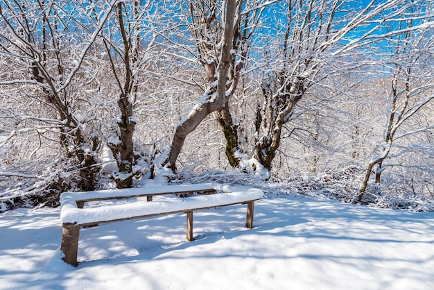 Banc en bois couvert de neige dans le beau jardin d'hiver
