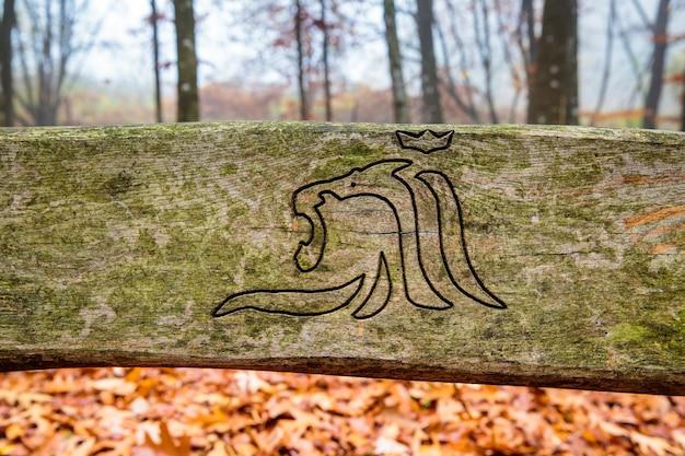 Banc en bois dans la forêt brumeuse au luxembourg