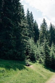 Un banc en bois dans une forêt de conifères verte haute épinette