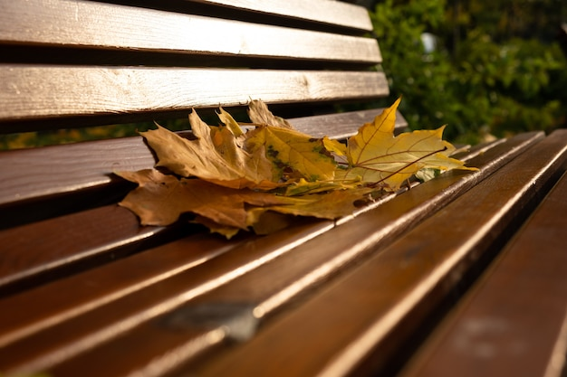 Banc en bois du parc d'automne dans le parc avec des feuilles d'arrière-plan temps d'automne