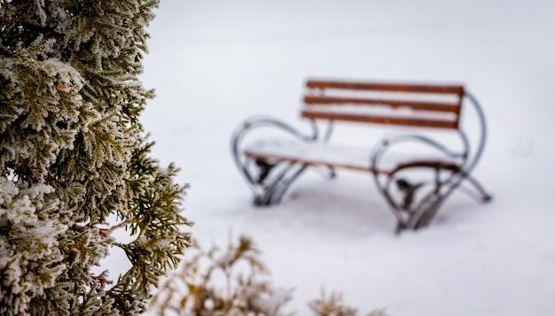 Banc près de thuya dans le parc de la ville en hiver_