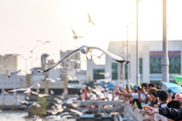 Bang pu et les visiteurs nourrissent des milliers de mouettes