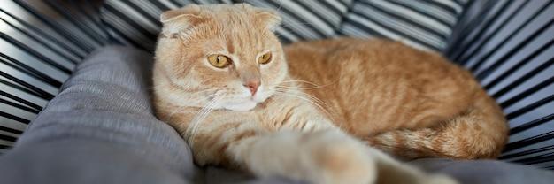 Bannière de chat roux tabby paresseux relaxant sur un oreiller placé sur un fauteuil moelleux