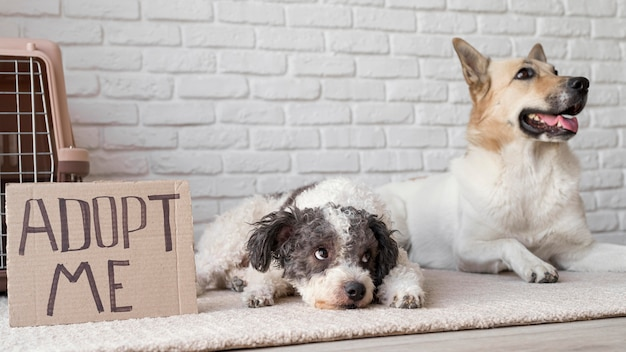 Bannière de chiens smiley près de adoptez-moi