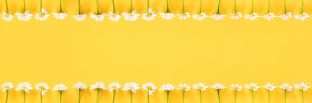 Bannière faite de fleurs de camomille blanche sur jaune