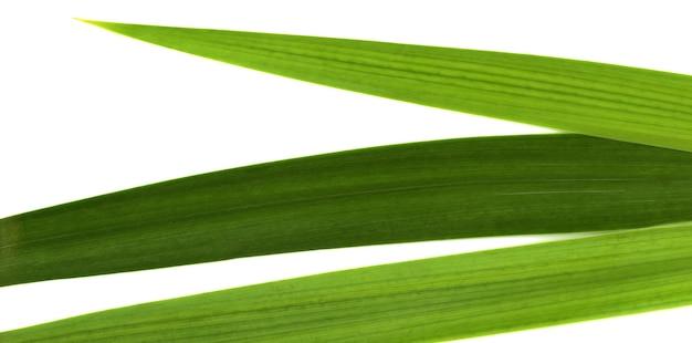 Bannière de feuilles vertes