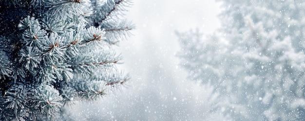 Bannière, fond de noël et du nouvel an avec des branches d'épinette pendant les chutes de neige, panorama