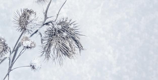 Bannière avec un givre et des chardons couverts de neige dans un champ sauvage en hiver