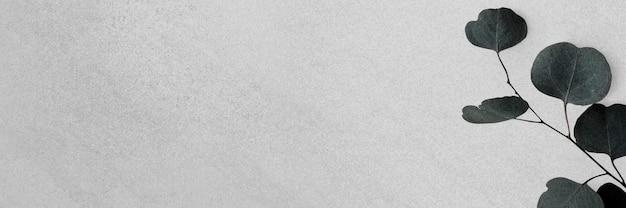 Bannière grise de branche d'eucalyptus dollar en argent