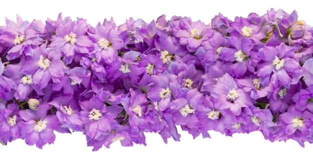 Bannière horizontale sans fin sans couture faite de fleurs de delphinium lilas isolées sur fond blanc. vue de dessus, copiez l'espace.