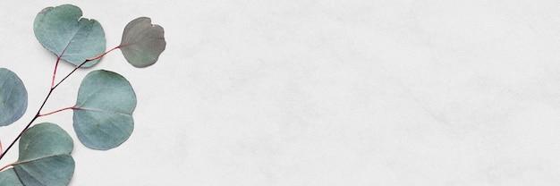 Bannière de marbre blanc eucalyptus dollar en argent