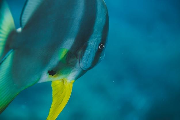 Bannière masquée dans les eaux tropicales de l'océan