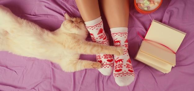 Bannière pour le jour de noël confortable web avec un chat, les pieds des femmes en chaussettes, à côté du chat se trouve.