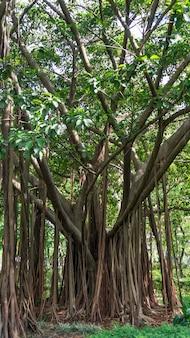 Banyan tree à hong kong.