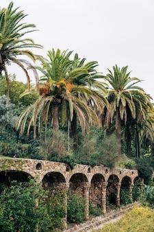 Barcelone espagne décembre ruelles à pied dans le parc guell barcelone espagne grands palmiers dattiers