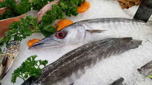 Barracuda poisson sur une glace.