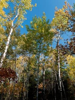 Bas affichage angle, de, arbres, dans, a, forêt, lac bois, ontario, canada