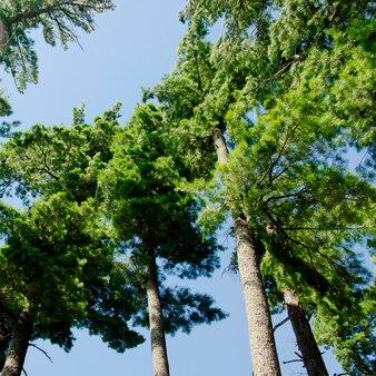 Bas affichage angle, de, arbres, lac bois, ontario, canada