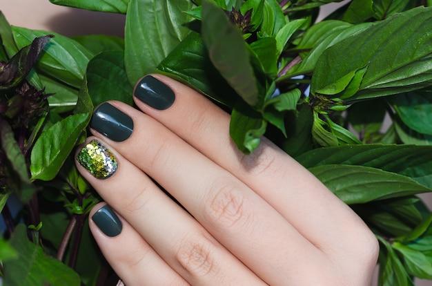 Basilic à la main féminine avec une belle manucure vert foncé