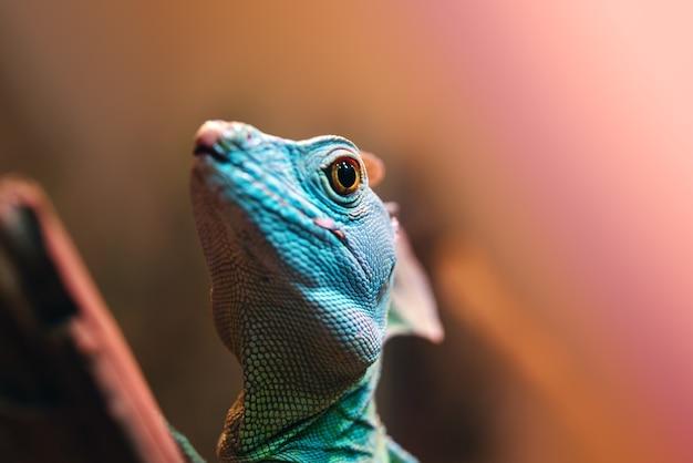Basilic vert ou lézard jésus-christ dans le terrarium du zoo