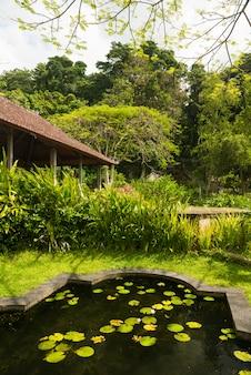 Bassin de lotus dans le parc indonésien