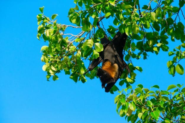 Bat sur l'arbre