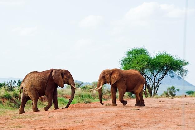 Bataille d'éléphants