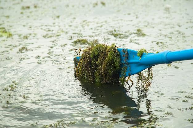 Un bateau bleu ramait des algues, un paysage forestier d'été.