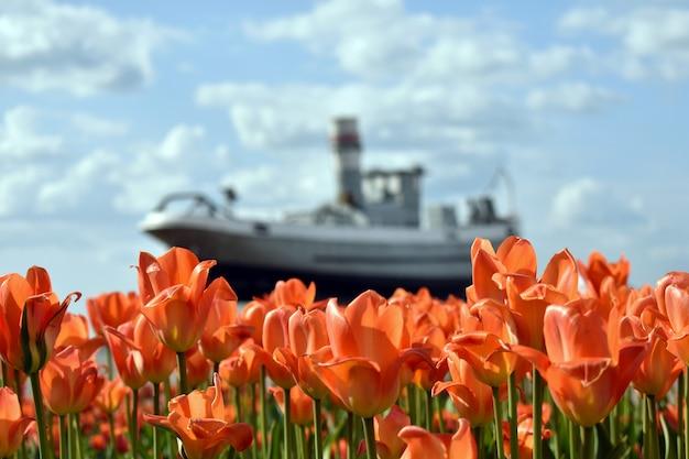 Bateau militaire dans le contexte du champ de tulipes