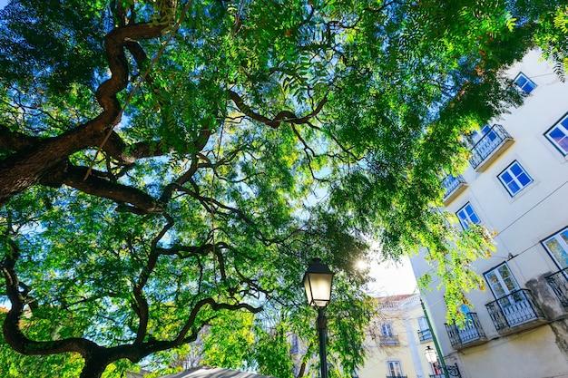 Bâtiment avec de belles fenêtres et balcons et une branche d'arbre sous laquelle une vieille lanterne