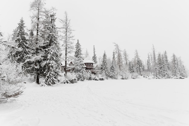 Bâtiment en bois dans la forêt froide d'hiver
