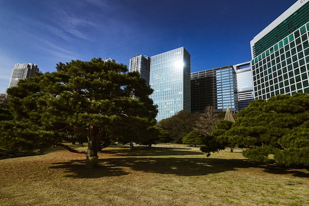 Bâtiments juxtaposés aux jardins hamarikyu à tokyo