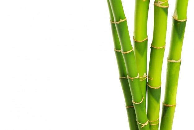 Bâtons de bambou vert