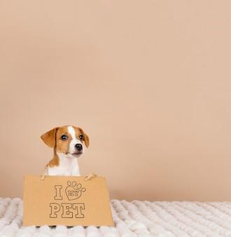 Beagle mignon portant une bannière