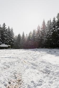 Beau bois de sapin et champ en hiver